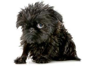 sad-ugly-dog