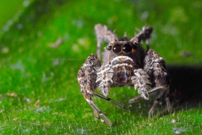 spider!