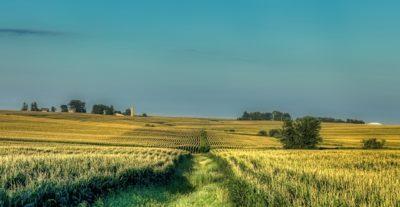 Corn flied in Iowa.